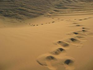 37835-footprints-in-the-desert-0